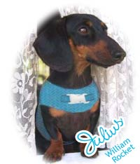 Our inspiration Julius the Doxie
